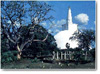 Anuradhapura, the ancient capital of Sri Lanka founded almost 2500 years ago, retained its grandeur and glory for over a millennium