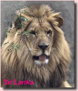 The Lion of Sri Lanka is symbolic of the bravery of those early settlers from North (or North Eastern) India who spoke an Indo-Aryan dialect.